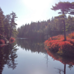 Pine and spruce trees and bright red bushes are reflected in a still lake